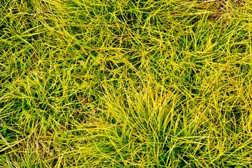 Grass background vibrant color