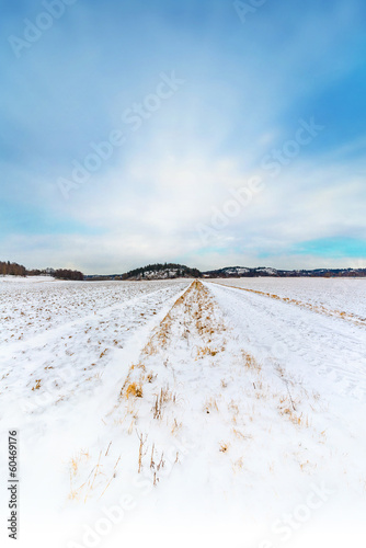 Snow covered crop field with blue sky - 60469176