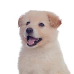 Nice dog with soft white hair