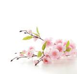 Cherry blossoms - 60473571
