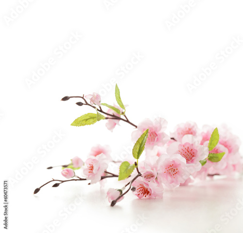Foto op Canvas Kersen Cherry blossoms