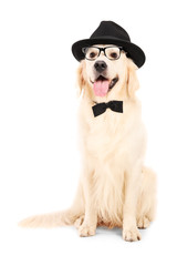 A portrait of dog dressed-up in bow tie hat and glasses