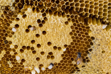 Closeup honeycomb.