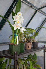 Orchids in Garden Greenhouse
