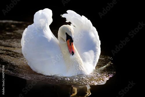Papiers peints Cygne Swan
