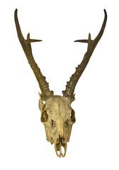 deer antlers with skull