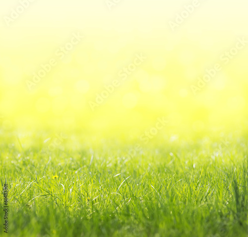Spring green, yellow, sunny background