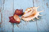 seashell on a wooden background