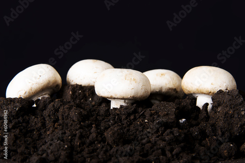 Fresh mashrooms in the ground.