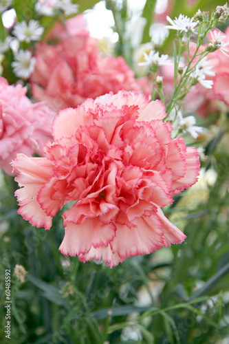 Soft orange carnation.
