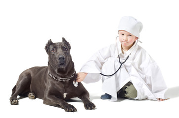 Little serious vet listens to dog