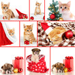 Collage of kitten and puppy with Christmas decorations