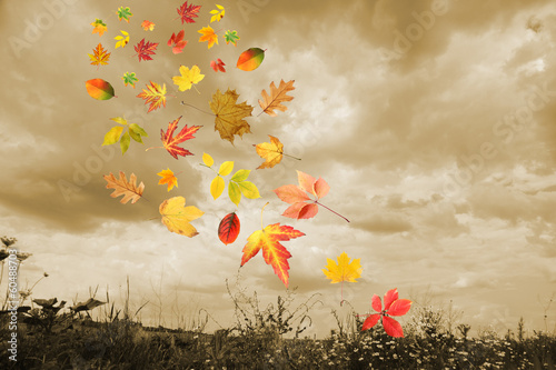 Cloudy sky and autumn leaves