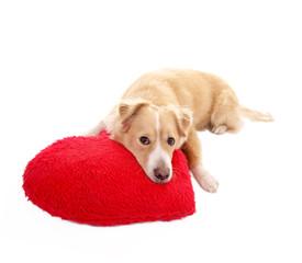 Hund mit Herzkissen