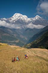 Women harvesting millet with Annapurna range in background