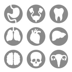 Set of icon internal organs