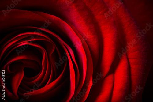 Natural red roses background © Lukas Gojda