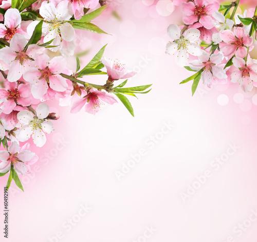 Fotobehang Kersen Peach flower blossom