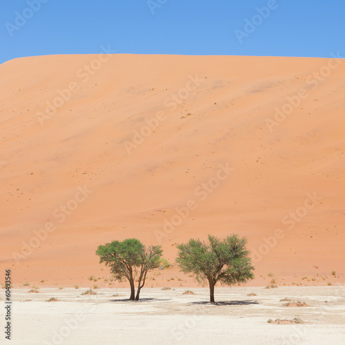 Two living trees in front of the red dunes of Namib desert