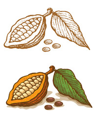 Illustrations of cocoa