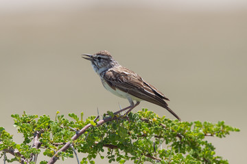 Small bird perched on a dry branch in Etosha