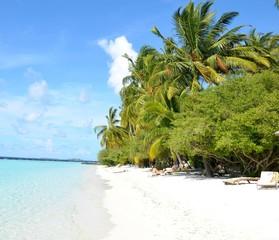 white sand beach with beautiful palms