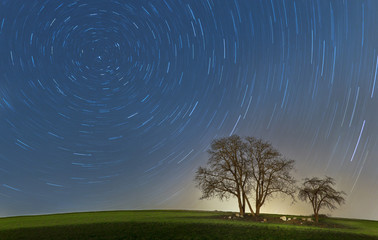 Startrails with trees
