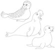 seal, sea bear and sea elephant