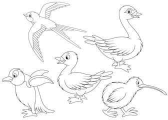 Martin, duck, swan, kiwi and penguin