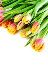 Colorful tulips on each other.