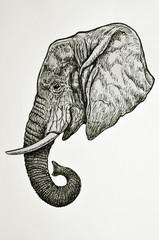 testa di elefante africano vista di profilo