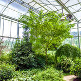 Glass conservatory and plants