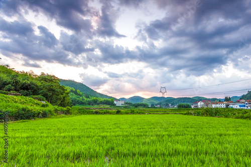 Rice fields in the South China side