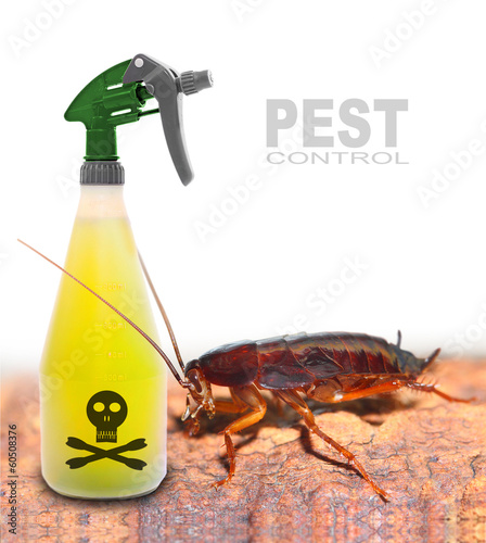 Plastic sprayer with insecticide and cockroach. Pest control.