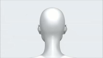 Der Kopf