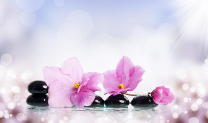 Black spa stones and flower on colorful background