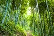 canvas print picture - Bamboo forest and walkway