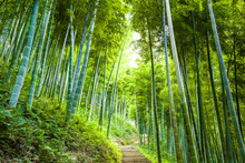 Forêt de bambous et une passerelle