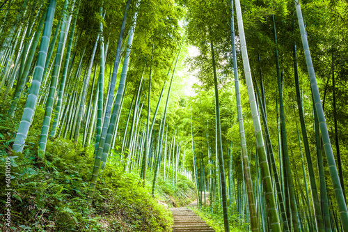 canvas print picture Bamboo forest and walkway