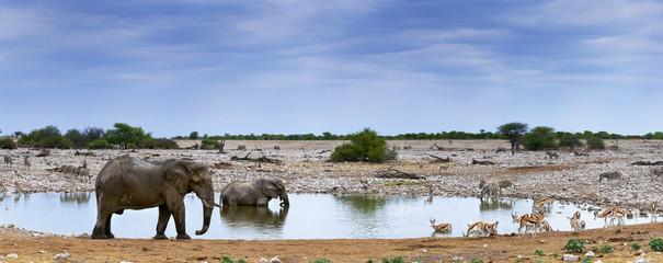 Elefanten und Zebras im Etosha Park, Namibia