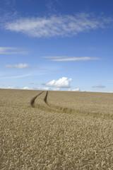 Tracks through the wheat