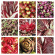 purple vegetable collage