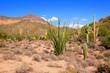 Arizona desert view near Phoenix