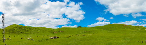 Foto op Canvas Heuvel Sheep in the New Zealand