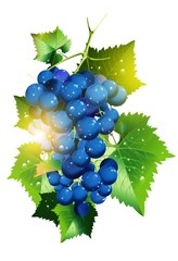Sunny Vineyard Grapes