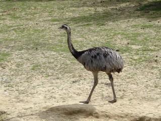 Emeu seule