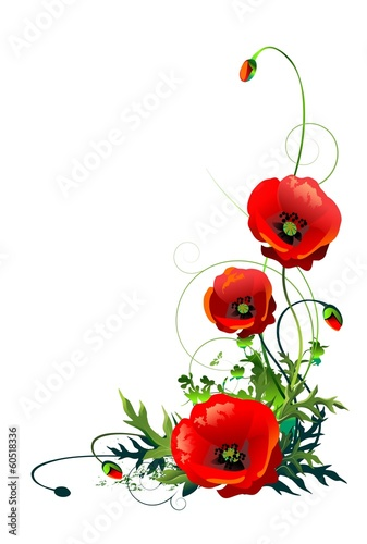 Poppy Flowers Isolated