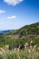 八重岳からの景色