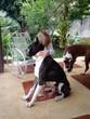 little dog lover