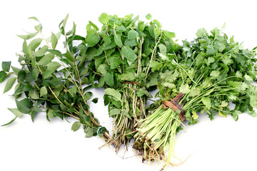 Sweet neem, mint and coriander leaves